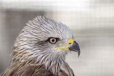 Free Beak, Bird, Bird Of Prey, Eagle Stock Image - 100633531