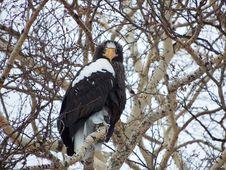 Free Bird, Eagle, Bird Of Prey, Branch Stock Photos - 100633593
