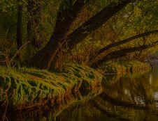 Free Reflection, Water, Nature, Vegetation Stock Image - 100634181