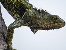 Free Reptile, Scaled Reptile, Lizard, Fauna Stock Photography - 100637612