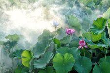 Free Flower, Plant, Lotus, Sacred Lotus Royalty Free Stock Photos - 100638028