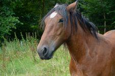 Free Horse, Mane, Pasture, Bridle Royalty Free Stock Photography - 100638347