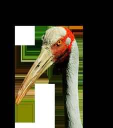 Free Beak, Fauna, Bird, Crane Like Bird Royalty Free Stock Photography - 100638367