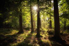 Free Forest, Woodland, Nature, Ecosystem Royalty Free Stock Image - 100638406