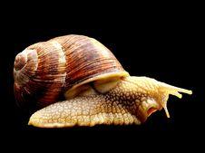 Free Snails And Slugs, Conchology, Molluscs, Snail Royalty Free Stock Photos - 100646308