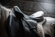 Free Horse, Horse Tack, Black, Bridle Stock Photo - 100651170