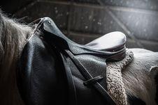 Free Horse, Horse Tack, Black, Bridle Stock Photo - 100651170