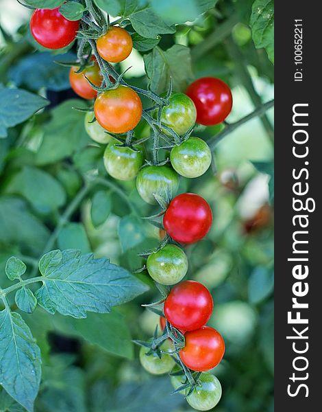Natural Foods, Fruit, Tomato, Potato And Tomato Genus