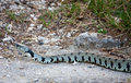 Free Snake Stock Photo - 10071660
