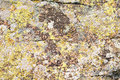 Free Moss And Lichen On Granite Stone Stock Photography - 10079092