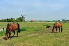 Free Windmill And Horses On Farmland Stock Photos - 10070043