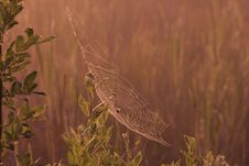 Free Cobweb On The Swamp Royalty Free Stock Images - 10072809