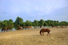 Free Horses Near The River And Wood Royalty Free Stock Image - 10073206