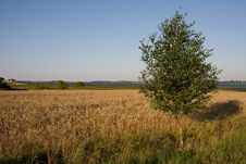Free Alone Tree In The Field Royalty Free Stock Image - 10075156