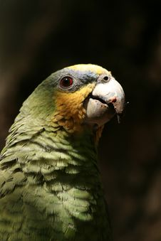A Green Parrot Stock Photo