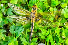 Free Dragonfly Stock Image - 10075721