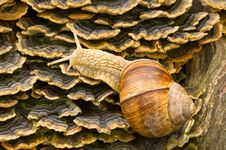 Free Snail Royalty Free Stock Image - 10076386