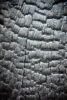 Free Scorched Wood Texture Royalty Free Stock Image - 10077066