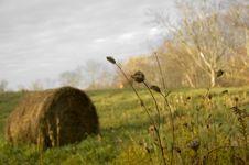 Free Farm Stock Photos - 10077143