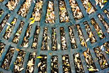 Free Autmn Leaves On Grate Stock Photos - 10077493