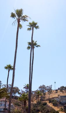 Free Palm Tree Royalty Free Stock Photos - 10077728
