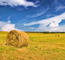 Free Golden Field Stock Images - 10078224