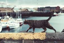 Free Cat, Water, Small To Medium Sized Cats, Cat Like Mammal Royalty Free Stock Image - 100702616