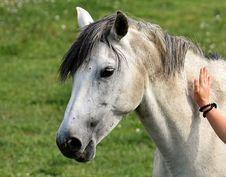 Free Horse, Mane, Bridle, Horse Like Mammal Stock Photo - 100702690
