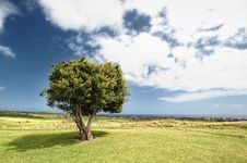 Free Sky, Cloud, Tree, Grassland Royalty Free Stock Photography - 100702887