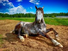 Free Horse, Horse Like Mammal, Mane, Mustang Horse Stock Photography - 100702992