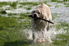 Free Dog, Dog Breed Group, Dog Like Mammal, Fauna Stock Images - 100703534