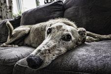 Free Dog, Dog Breed, Black And White, Dog Like Mammal Stock Images - 100703994