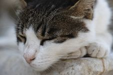 Free Cat, Whiskers, Small To Medium Sized Cats, Fauna Stock Photos - 100709663