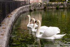 Free Bird, Waterway, Swan, Water Stock Photo - 100715500