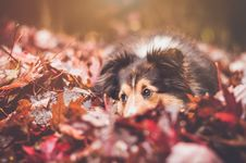 Free Dog, Dog Breed, Leaf, Puppy Stock Images - 100715624