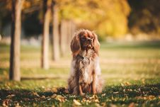 Free Dog, Dog Breed, Dog Like Mammal, Grass Stock Photography - 100724762