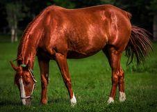 Free Horse, Grazing, Mane, Mare Royalty Free Stock Image - 100724786