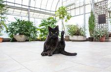 Free Cat, Mammal, Small To Medium Sized Cats, Cat Like Mammal Stock Photos - 100724903