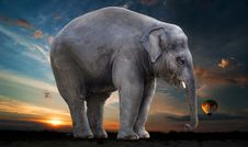 Free Elephant, Elephants And Mammoths, Indian Elephant, Mammal Stock Images - 100726164