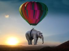 Free Elephants And Mammoths, Hot Air Balloon, Hot Air Ballooning, Sky Stock Photo - 100726460