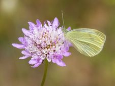 Free Flower, Insect, Moths And Butterflies, Butterfly Royalty Free Stock Image - 100770706