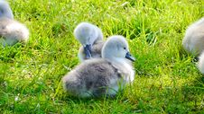 Free Bird, Water Bird, Fauna, Grass Stock Photos - 100772763