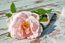 Free Flower, Pink, Rose Family, Rose Stock Image - 100772801
