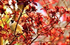 Free Red, Branch, Autumn, Twig Stock Images - 100774714