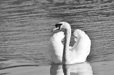 Free Black And White, Bird, Water Bird, Water Stock Photos - 100775673