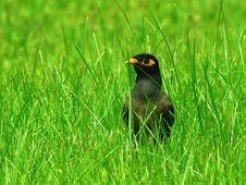 Free Bird, Ecosystem, Beak, Grass Royalty Free Stock Image - 100775746