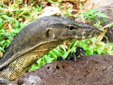 Free Reptile, Terrestrial Animal, Scaled Reptile, Fauna Stock Photo - 100776110