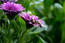 Free Flower, Plant, Flora, Purple Stock Images - 100776194