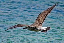 Free Bird, Fauna, Seabird, Wildlife Stock Images - 100778254