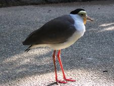 Free Bird, Beak, Shorebird, Seabird Royalty Free Stock Images - 100778469